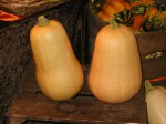 Courges_butternut_01.jpg
