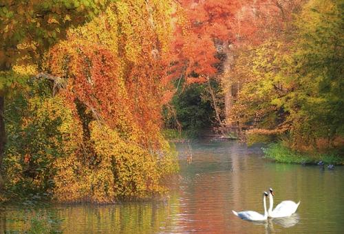 automne-sur-l-etang.jpg
